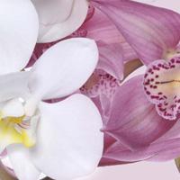 Кухонный фартук серия Цветы